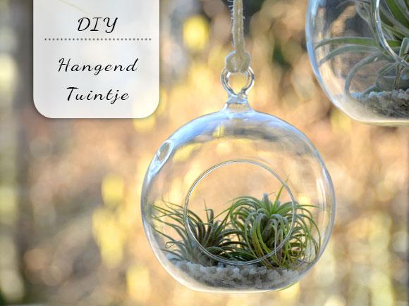 DIY: Hangend tuintje met luchtplantjes