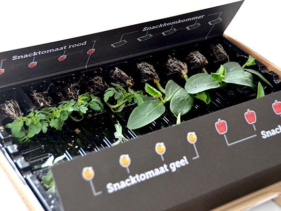 Mijn moestuin voor beginners #4: Sprout of the Box