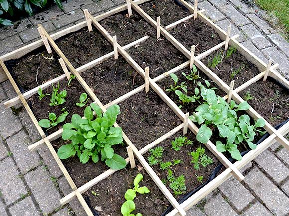 Mijn moestuin voor beginners #5: Eerste oogst