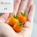 Mijn moestuin voor beginners #8: oogsten en zaaien