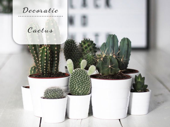 Cactussen zijn leuk!