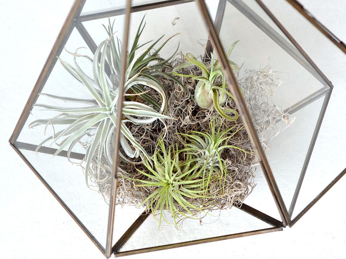 DIY: Terrarium met luchtplantjes