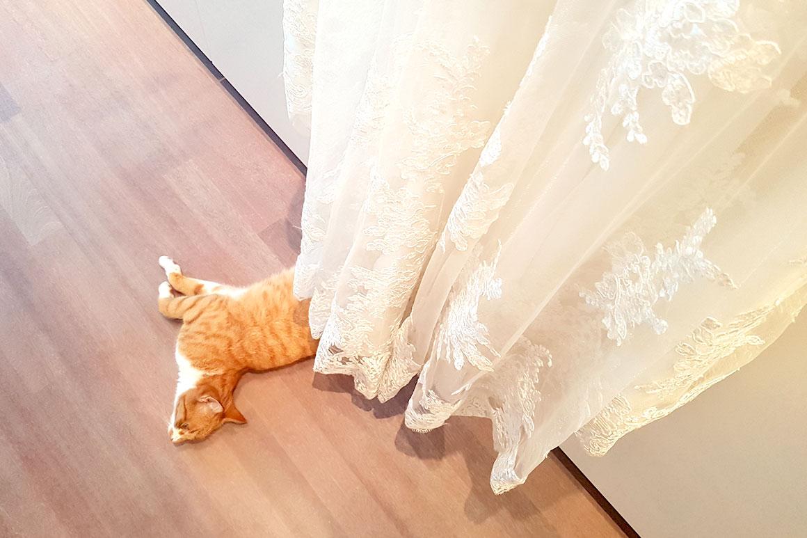 Dagboek: Rond onze bruiloft en huwelijksreis