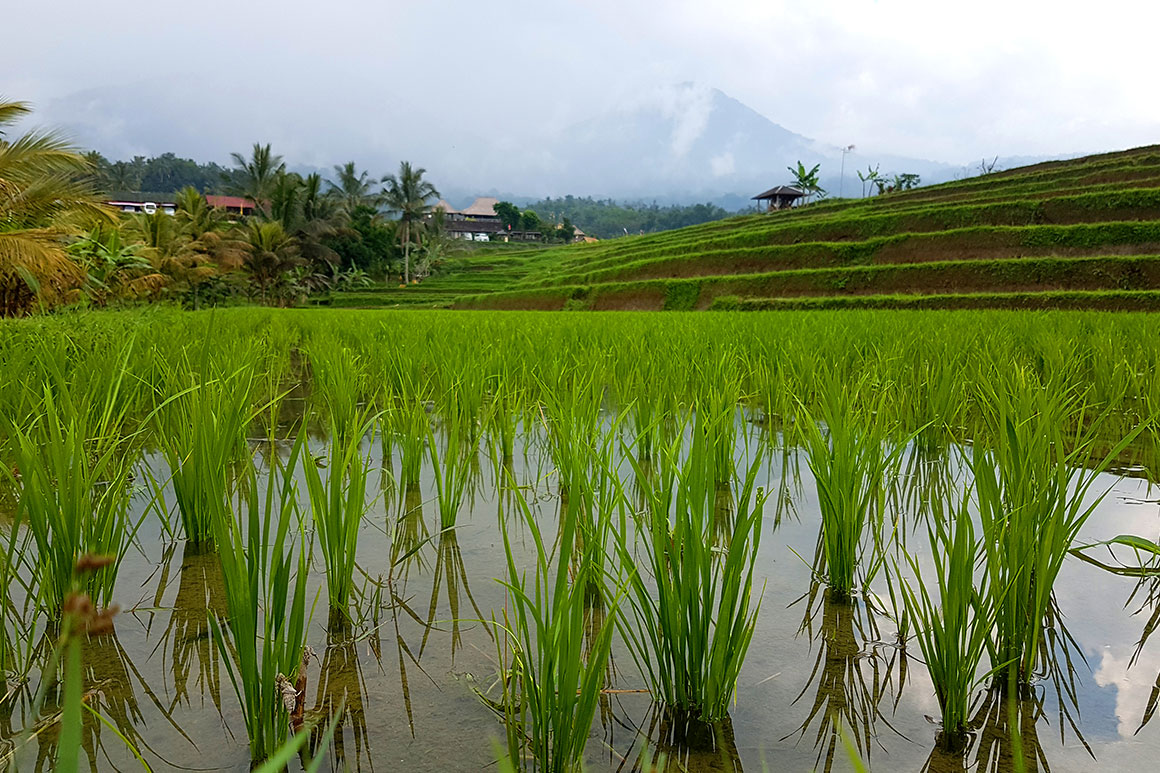 Onze bruiloft: Bali honeymoon deel 1