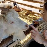 Dagboek: Geitenboerderij