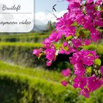 Onze bruiloft: Bali honeymoon video
